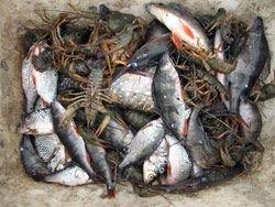 В Подмосковье введен запрет на ловлю рыбы
