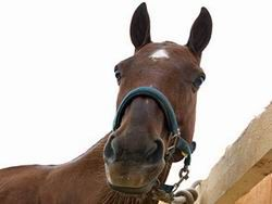 Лошадь уложила в больницу пять человек