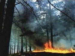 17 природных пожаров потушено на Дальнем Востоке за сутки