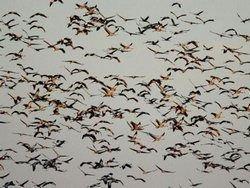 Перелетные птицы не приносят в Приморье радиацию