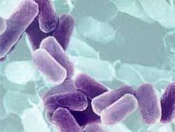 Бактерии владеют собственным языком общения