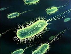 Здоровьем человека управляет 2 кг микробов