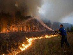 Число лесных пожаров в Сибири выросло