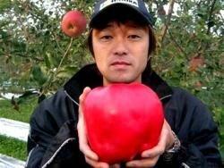 Японский фермер вырастил яблоко весом 1.85 кг