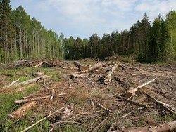 В Химках пройдет народный сход против вырубки леса
