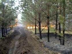 Площадь лесных пожаров в Сибири выросла в пять раз