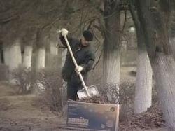 В Москве в ходе субботника посадили более двух тысяч деревьев