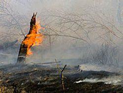 МЧС: потушены все природные пожары на Дальнем Востоке