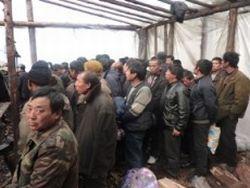 В России задержаны более полусотни китайских лесорубов