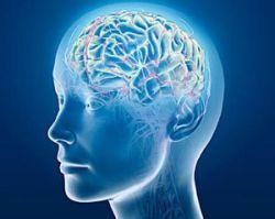 Ученые: умные живут дольше