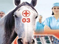 Скорая медицинская лошадь Татьяны Голиковой
