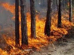Площадь пожаров в два раза превысила показатель 2010 года