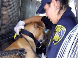В Голландии создана полиция для защиты животных