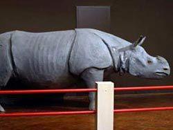 Из брюссельского музея украли голову носорога