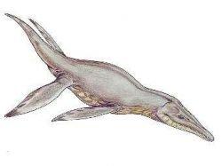 Найден череп гигантского морского ящера