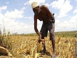 В Африке нарастает протест против ГМО