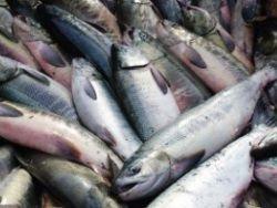 Сегодня   День рыбака