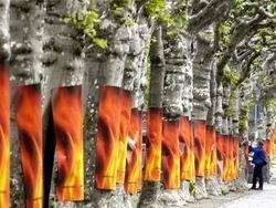 Экологи обнаружили 4 млн га сгоревшего леса