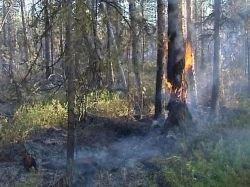 В России растет площадь природных пожаров