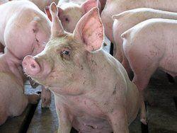 Канадцы нарушают ветеринарное законодательство стран ТС