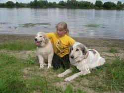 Кошка и собака: от каких хворей спасают домашние любимцы