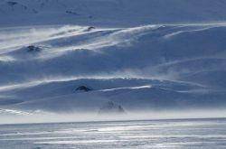 Жизнь под арктическими льдами (фото)