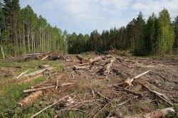 Иностранцы массово скупают земли на Алтае