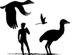 С мезозойскими динозаврами сосуществовали птицы-гиганты