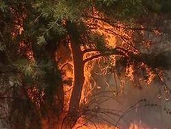 В Волгоградской области тушат крупный природный пожар
