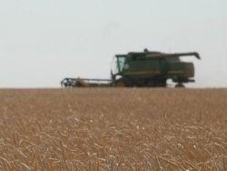 В Индии не хватает сельхозработников в разгар сезона