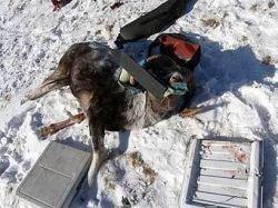 Оправдательный приговор по делу об охоте на архаров отменен
