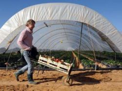 Новость на Newsland: Испании разрешили не принимать трудовых мигрантов из Румынии