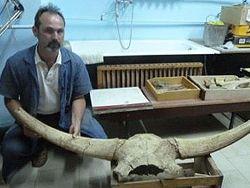 В Астраханской области найдены останки бизона и носорог