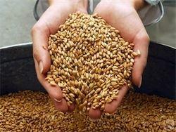В России намолочено более 41 млн тонн зерна