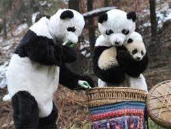 Китайские зоологи маскируются под животных