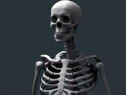 В новозеландской школе нашли человеческий скелет