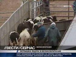 Евросоюз запретит ввоз английской говядины