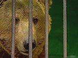 Под Хабаровском медведь откусил руку пятилетней девочке