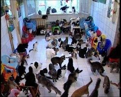 Возможно ли, содержать 130 котов в одной квартире? (видео)