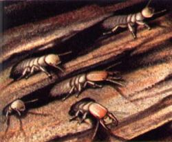 Термит двигает челюстями быстрее всех на Земле
