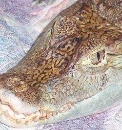 В Москве крокодил упал на прохожих с 12-го этажа