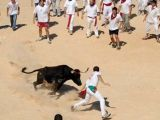 Французские быки пострадали от вспышки ящура в Британии