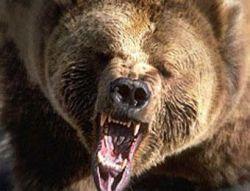 В Подмосковье женщину задрал медведь