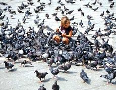 Основная проблема Венеции не угроза затопления, а голуби
