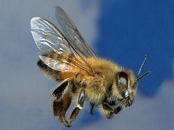 В Армении опрокинулся грузовик с пчелами