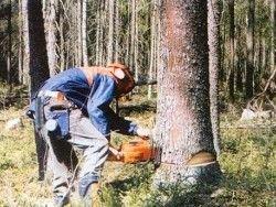 Россия отдала в аренду Китаю 1 млн гектаров леса под вырубку