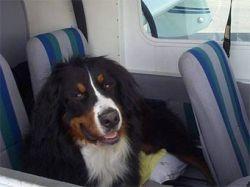 Собака спасла от катастрофы авиалайнер
