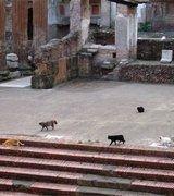 В Италии кошки - превыше всего
