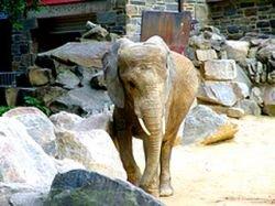 Один из зоопарков Франции придумал средство для похудения слонов