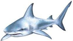 Хит-парад любимых песен акул